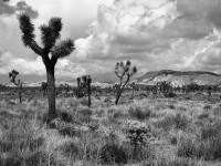 Joshua Tree National Monument (1989)